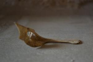 Galilee fish bone