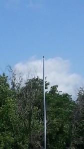 Flag bird