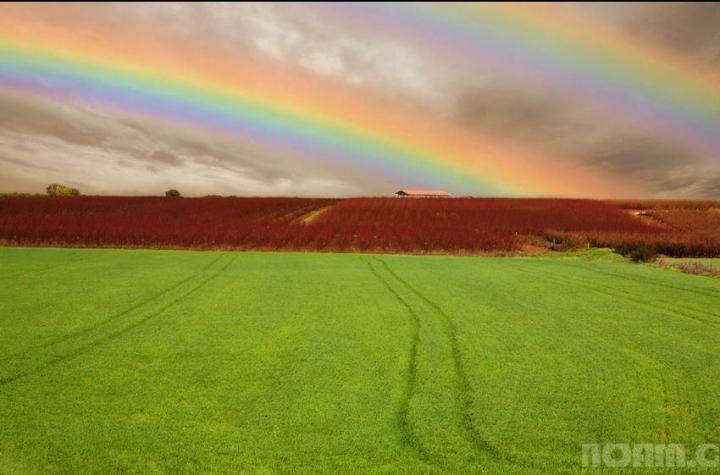 israels-rainbow